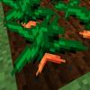 ギザールの栽培