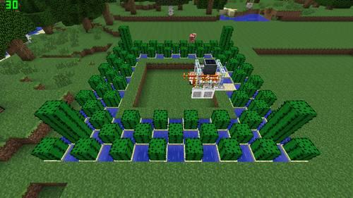 サボテン畑