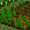 作物の育成