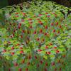 果樹の栽培と収穫